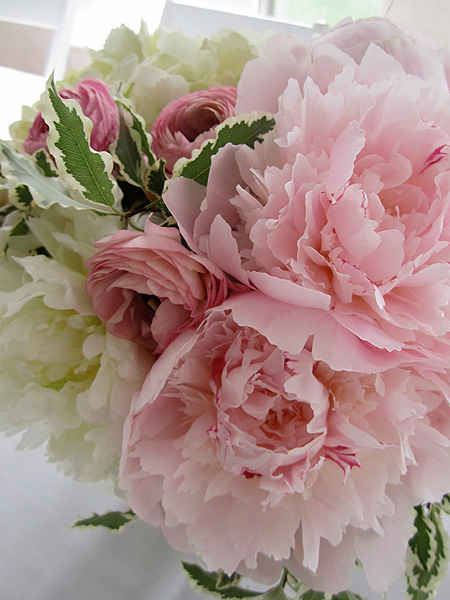 Spring Elderberry Design amp Flowers