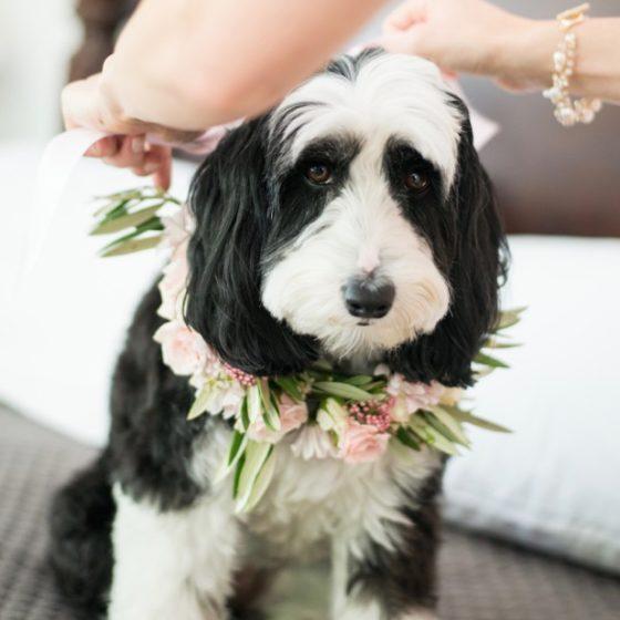 Doggie with flower collar
